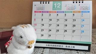 いのししとカレンダー2019.JPG